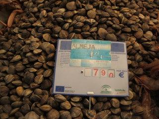 Meeresfrüchte und Fisch - mariscos y pescado - mariscos, almejas, mercado, Meeresfrüchte, Muscheln, Markt, Venusmuscheln, Teppichmuscheln, Preis, Euro, einkaufen