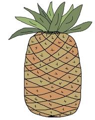 Ananas Zeichnung #2 - Ananas, Frucht, Obst, Bromeliengewächs, süß, Zeichnung, Illustration