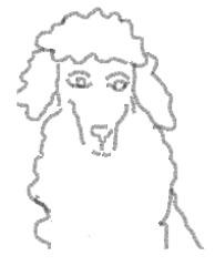 Pudel_Ausmalbild - Hund, Haustier, Pudel