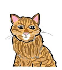 Katze#3_Waldkatze - Katze, Haustier, Waldkatze, wild, bunt