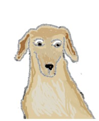Mischling_bunt - Hund, Haustier, Mischling, Mischlingshund, Streuner, bunt