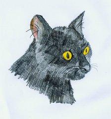 Schwarze Katze - Katze, Haustier, schwarz, Wörter mit tz