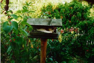 Katze - Katze, Vogelhaus, warten, schlafen, Schreibanlass