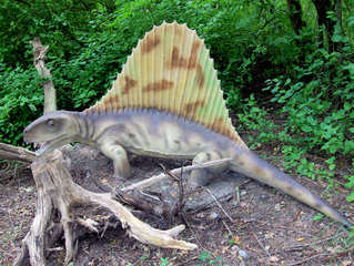 Dinosaurier in einem Dino-Park #3 - Dimetrodon - Urzeit, Dinosaurier, Saurier, groß, ausgestorben, Urzeittier, Urzeittiere, gefährlich, Krallen, Echse, Evolution, Drache, Biologie, Dino, Fossil, Dimetrodon, Perm
