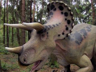 Dinosaurier in einem Dino-Park #20 - Triceratops - Urzeit, Dinosaurier, Saurier, groß, ausgestorben, Urzeittier, Urzeittiere, Echse, Evolution, Drache, Biologie, Dino, Fossil, Triceratops, Kreide, Platte, Hörner, drei