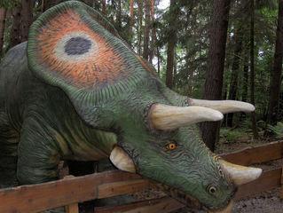 Dinosaurier in einem Dino-Park #21 - Torosaurus - Urzeit, Dinosaurier, Saurier, groß, ausgestorben, Urzeittier, Urzeittiere, Evolution, Drache, Biologie, Dino, Fossil, Platte, Hörner, drei, Torosaurus, Pflanzenfresser, Kreide