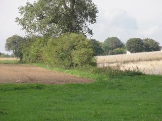 Hecke - Hecke, Rain, Feld, Wiese, Grenze, Acker, Ackerfläche, Stoppelfeld, Baum, Sträucher, Biotop, Windschutz