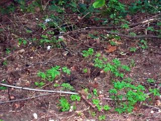 Waldboden mit unterschiedlichen Waldfrüchten - Wald, Waldboden, Eicheln, Pilze, Kienäpfel, Spuren, Früchte, Frucht