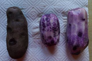 Lila Kartofffel - Kartoffel, lila, Vitelotte, truffe de chine