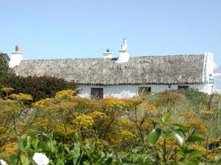 Irland - Haus - Irland, Haus, Schilf, Reetdach, wohnen, Wiese