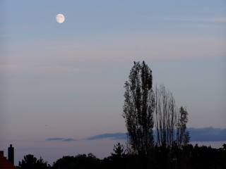 Dämmerung im Oktober - Mond, Dämmerung, Schatten, Pappel, Herbst, Herbststimmung, Romantik, Abend, Stimmung, abendlich, Silhouette, Mondlicht, herbstlich, Meditation