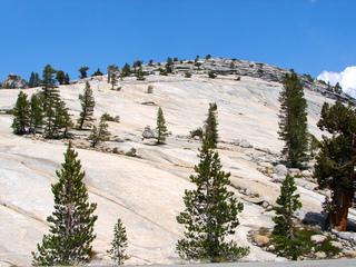 Granithochfläche mit Kiefern - Geografie, Yosemite, Nationalpark, Granit, Granitfelsen, Extremvegetation, Kiefer, Hochgebirge, Hochland, Fels, Stein, Gestein, weiß, grau, Kalifornien, Sierra Nevada, USA, UNESCO-Weltnaturerbe, Erosion, zerklüftet