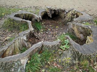 alter Baumstumpf - Wald, Baum, Baumstumpf, Rinde, verwittert, Verwitterung, hohl, ausgehöhlt