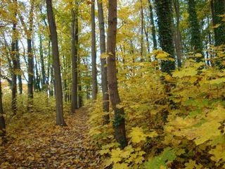 Goldener Herbst#6 - Mischwald, Herbst, Sonne, sonnig, Stimmung, Impression, Bäume
