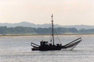 Elbfischer - Fischerboot, Elbe, Fischer, fischen, Fluss, Fischernetz, Elbe, Altes Land, Kutter
