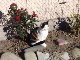 Katze beim Entspannen #3 - Haustiere, Katze, Sand, aufmerksam, lauschen