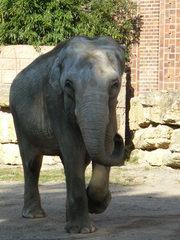 Elefant#1 - Elefant, Wildtier, Elefant, Dickhäuter