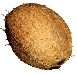 Kokosnuss #2 - Kokosnuss, Kokospalme, Frucht, Steinfrucht, Schale, Fasern, Keimloch, Tropen, braun