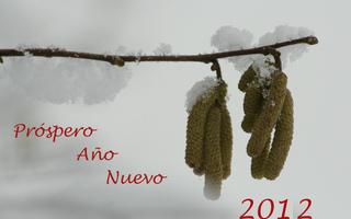 Próspero Año Nuevo 2012 - Próspero, Año, Glückwunsch, Neujahr, Neues Jahr