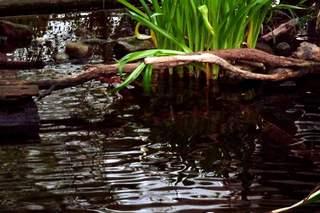 Wasserimpression#2 - Wasser, Meditation, Ruhe, Entspannung, Reflexionen, Reflexion