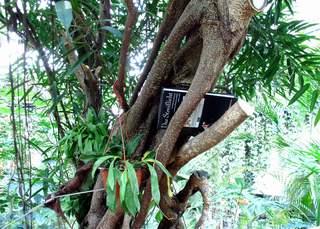 Streiflichter im Regenwald - Regenwald, Dschungel, Tropen, Metapher, Impuls, Buch, Baum, lesen, Urwald, Wald, Blatt, urwüchsig