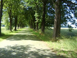 Allee im Frühjahr - Straße, Allee, B 96, Kopfsteinpflaster, Laubbäume