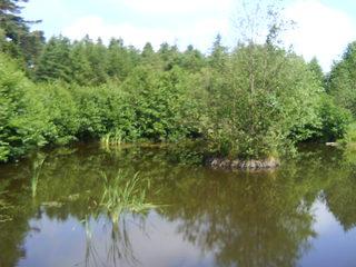 Teich im Wald - Teich, Ufer, bewachsen, Wald, Stille, einsam, Spiegelung, Spiegelbild