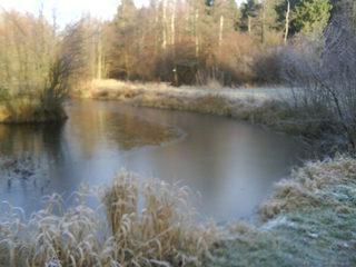 Teich bei Frost - Teich, Wald, Herbst, Winter, Ufer, bewachsen, Eis, Frost, frostig, zugefroren, Gefrierpunkt, Anomalie, Physik