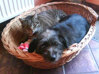 Hund und Katz an einem Platz - Korb, Hund, Katze, Haustier