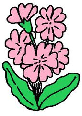 Clipart Primel - Primel, Frühblüher, Illustration, rosa, Frühling