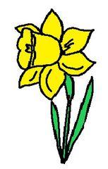 Clipart Narzisse - Narzisse, gelb, Frühblüher, Illustration, Frühling