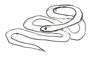 Schlange - Natur, Tier, Kriechtier, Schlange, Anlaut Sch, Reptilien