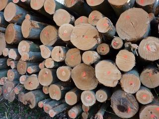 Forstwirtschaft#3 - markierte Baumstämme - Holz, Baumstämme, Stämme, schlichten, schichten, geschlichtet, aufgerichtet, aufgeschichtet, gepoltert, Struktur, Oberfläche, geordnet, Holzstoß, Holzstapel, Polter, Scheiter, Scheit, Brennholz, Feuerholz, Holznutzung, Forstwirtschaft, Forstarbeiten, Holzhandel, Wald, Waldbewirtschaftung, Rohstoffquelle, markiert