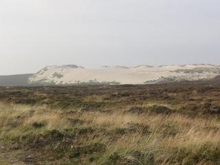 Wanderdüne - Düne, Wanderdüne, Sand, Bewegung, Sylt, List, Nordsee, Wind, Sturm, Sandkörner, bewachsen, bedeckt, Heide, Strandbepflanzung, Küste