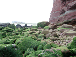 Felsküste auf Helgoland - Felsen, Helgoland, Kalksandstein, Kreide, Buntsandstein, Eisen, Geologie, Kupfersulfat, Insel, Nordsee, Erosion, Alge, Ebbe, Flut