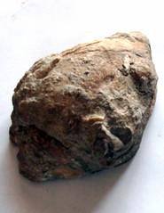 Fossil Schnecke#3 - Fossil, Schnecke, versteinert, Stein