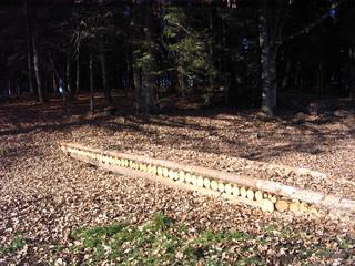Waldweg im Herbst - Weg, Waldweg, Pfad, Meditation, Zersetzung, Stoffkreislauf, Laub, Wald