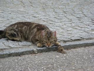 Katze mit Beute #2 - Katze, Beute, Beutetrieb, Jagdtrieb, Haustier, Vogel, Sperling