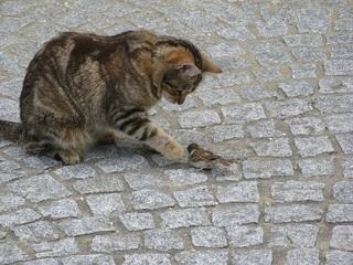 Katze mit Beute #5 - Katze, Beute, Beutetrieb, Jagdtrieb, Haustier, Vogel, Sperling