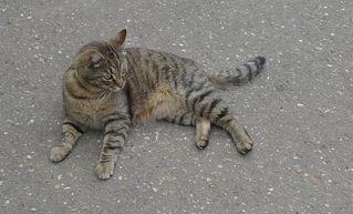 Katze - Katze, Haustier