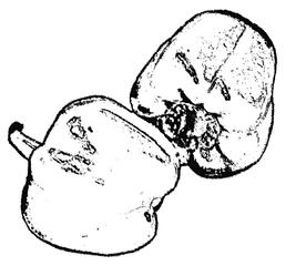 Paprika sw - Paprika, Frucht, zwei, Gemüse