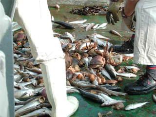 Fang - Fischerei, Schleppnetz, Grundschleppnetz, Fischfang, Fang, Meer, Schiff