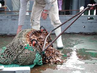 Grundschleppnetz mit Fang - Fischerei, Schleppnetz, Grundschleppnetz, Fischfang, Fang, Meer, Schiff