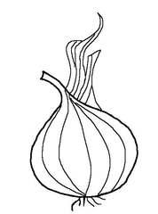 Zwiebel sw - Zwiebel, Frucht, scharf, Gemüse, Einzahl, Singular