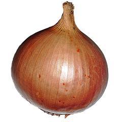 Zwiebel - Zwiebel, Gemüse, Speisezwiebel, lilienähnlich, spargelartig, Zwiebellauch, Bolle, Küchenzwiebel, Gartenzwiebel, scharf, Sommerzwiebel, Hauszwiebel, Gemeine Zwiebel, würzig, Schale