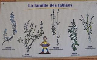 Lippenblütler Bildtafel - Biologie, Pflanzen, Lippenblütler, Information, Pflanzen bestimmen