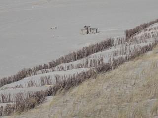Strandhafer - Strandhafer, Küstenschutz, Düne, Sylt, Nordsee, Nordseeküste, Sturm, Sand