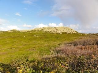 Düne - Düne, Sand, Wind, Küstenschutz, bewegen, Pflanzen, bepflanzt, Düne, Sylt, Heide, Strandhafer