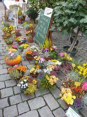 Gärtner-Markttage #3 - Herbst, Dekoration, Blumen, Blumengesteck, Gesteck, Stand, Verkauf, Handel, Markt, Gärtner