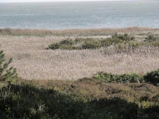 Schilf 3 - Schilf, Schilfrohr, Röhricht, Reet, Gräser, Sumpfpflanze, Wasserpflanze, hochwüchsig, großwüchsig, schilfartig, sumpfig, Vegetationsbestand, Ufergebiet, Gewässerrand, Strand, Hieroglyphe